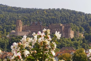 romantic picture of Heidelberg castle with flowers in the foreground