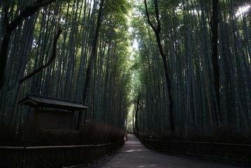 薄暗い竹林の道