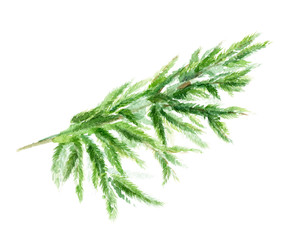 Watercolor Vector branch of a Christmas tree. Hand drawing texture with fir needle isolated on a white background.