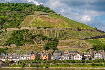 Vineyards at Rhine Valley in Germany