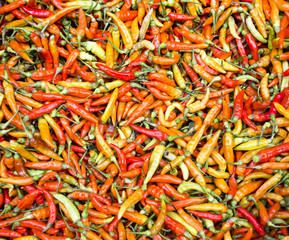 Red chili pepper wallpaper