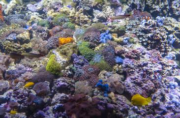 Big aquarium or oceanarium with imitation of coral reef