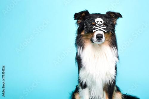 Schwarz Weisser Hund Mit Verkleidung Stock Photo And Royalty Free