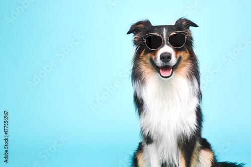 Schwarz Weisser Hund Mit Brille Stock Photo And Royalty Free Images