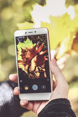 A hand holding a smartphone using camera function to take photo of fallen leaves at home garden on sunny day