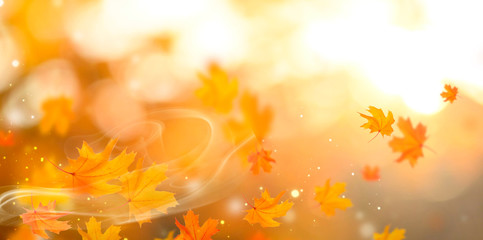 Autumn. Fall abstract autumnal background with colorful leaves and sunflares