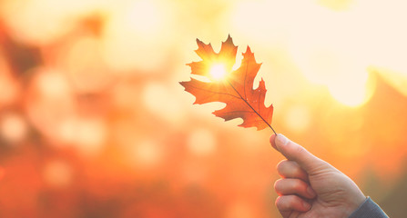 Wall Mural - Autumn backdrop. Person holding autumn leaf with sun beam over blurred autumn background