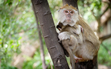 Monkey sitting on a tree happily