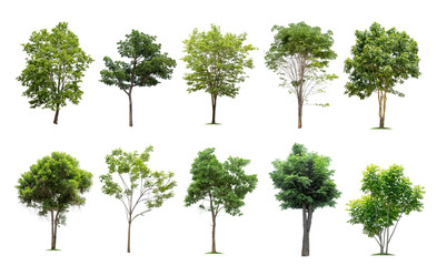 Collection of trees isolated on white background high resolution for graphic decoration, suitable for both web and print media