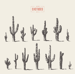 Set of cactuses hand drawn vector illustration ink