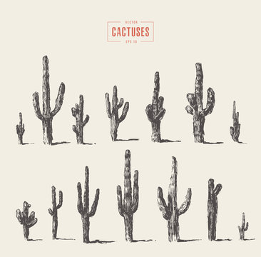 Set of cactuses hand drawn vector illustration ink