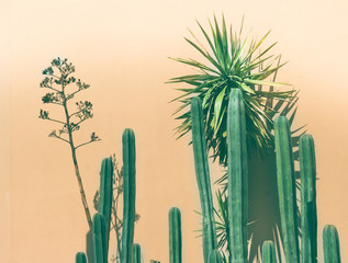 Green cactus photograph