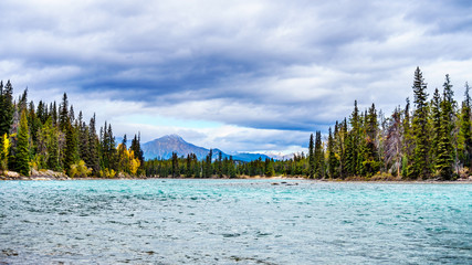 The meeting of the Athabasca River and the Whirlpool River in Jasper national Park in the Canadian Rocky Mountains in the province of Alberta Wall mural