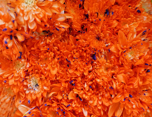 Fototapete - Close up on flowers in orange color