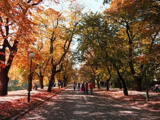 Vilson's promenade with beautiful autumn colors in sarajevo , Bosnia and Herzegovina