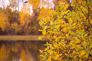 Autumn landscape of idyllic water and forest sometimes fall. Wildlife of Northern Europe autumn.