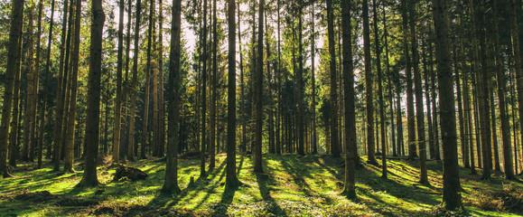 Bäume und Schatten