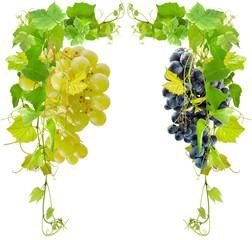 Wall Mural - pampres de vigne et grappes de raisin