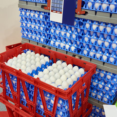 Chicken eggs in plastic boxes at food factory