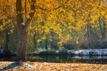 Landscape of autumn park. View of  fallen yellow leaves and first snow in sunshine. Collection of nature autumn  backgrounds.
