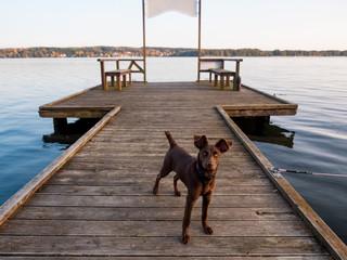 Hund auf dem Bootssteg