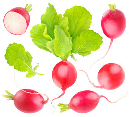 Isolated radishes. Collection of red radish vegetables of different shapes with leaves isolated on white background with clipping path