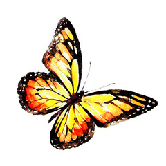 beautiful red butterfly, watercolor,isolated on a white