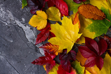 Natural fall leaves on gray stone background