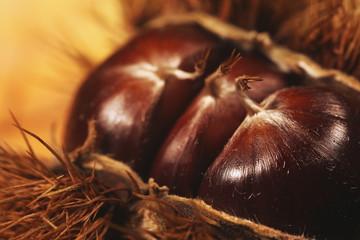Edible chestnuts in macro Closeup