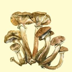 Watercolor mushrooms. Healthy food, autumn nature concept