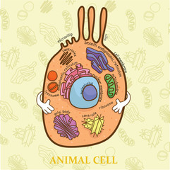 Education chart of biology for animal cell diagram