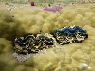 Coral in Red Sea