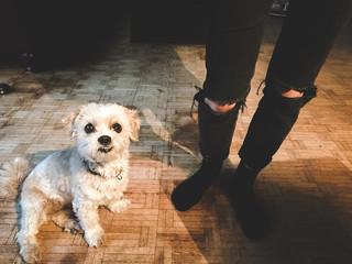 cute puppy chilling on hardwood floor