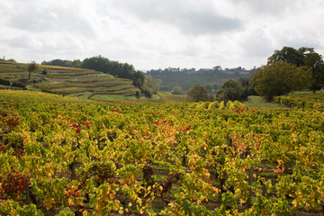 Vineyards of Saint-Emilion south west of France, Bordeaux