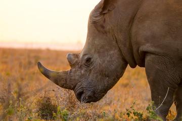 Foto op Aluminium Neushoorn rhino at the nairobi national park