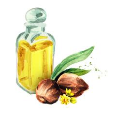 Jojoba organic oil. Watercolor hand drawn illustration