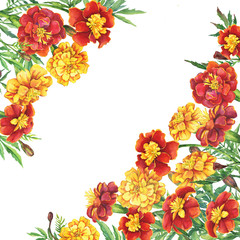 Border with a flowers Tagetes patula, the French marigold (Tagetes erecta, Mexican marigold). Red, yellow marigold. Watercolor hand drawn painting illustration isolated on white background.