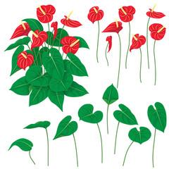 Anthurium Flowers Set