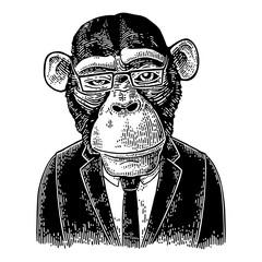 Monkey businessman in suit, tie, rectangular glasses. Vintage black engraving