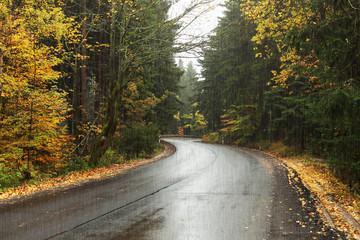 wet asphalt, leaves on the road, rain and winding road in the forest