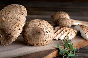 Macrolepiota procera is a very tasty edible mushroom