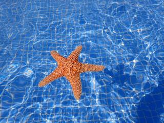 Star fish in swimming pool