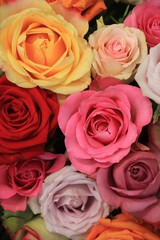 Colorful wedding roses