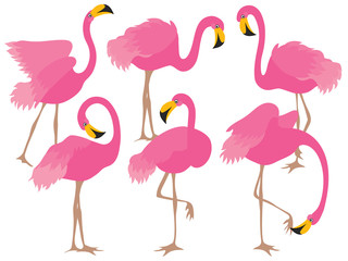 Vector Set of Beautiful Pink Flamingos