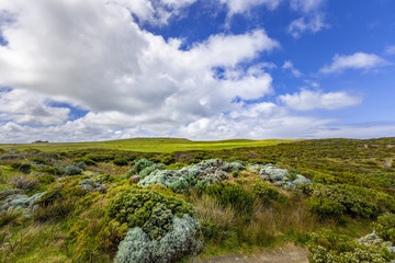 Australian coastal vegetation and white fluffy clouds in blue sky