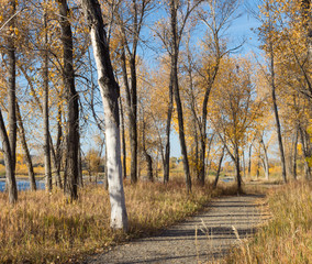 Trail Near the Yellowstone River with deciduous trees showing golden leaves. The river is seen in the distance.