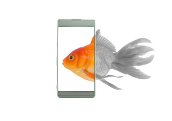 Monitor display screen technology of mobile phone, Goldfish swim into the phone an phone screen makes a bright colors, White background, Telephone technology concept.