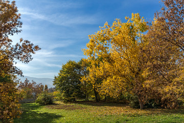 Amazing Autumn landscape with Yellow trees in South Park in city of Sofia, Bulgaria