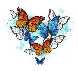 Door stickers Butterflies in Grunge morpho and monarchs