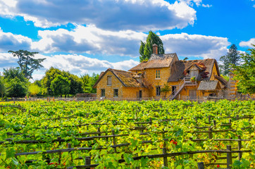 European rural landscape, an old French house with a vineyard.